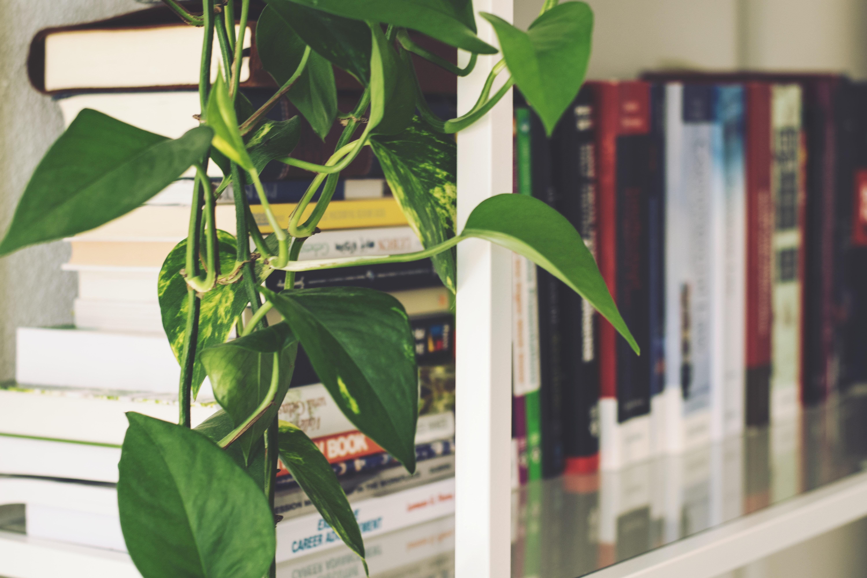 pothos houseplants hanging from a bookshelf