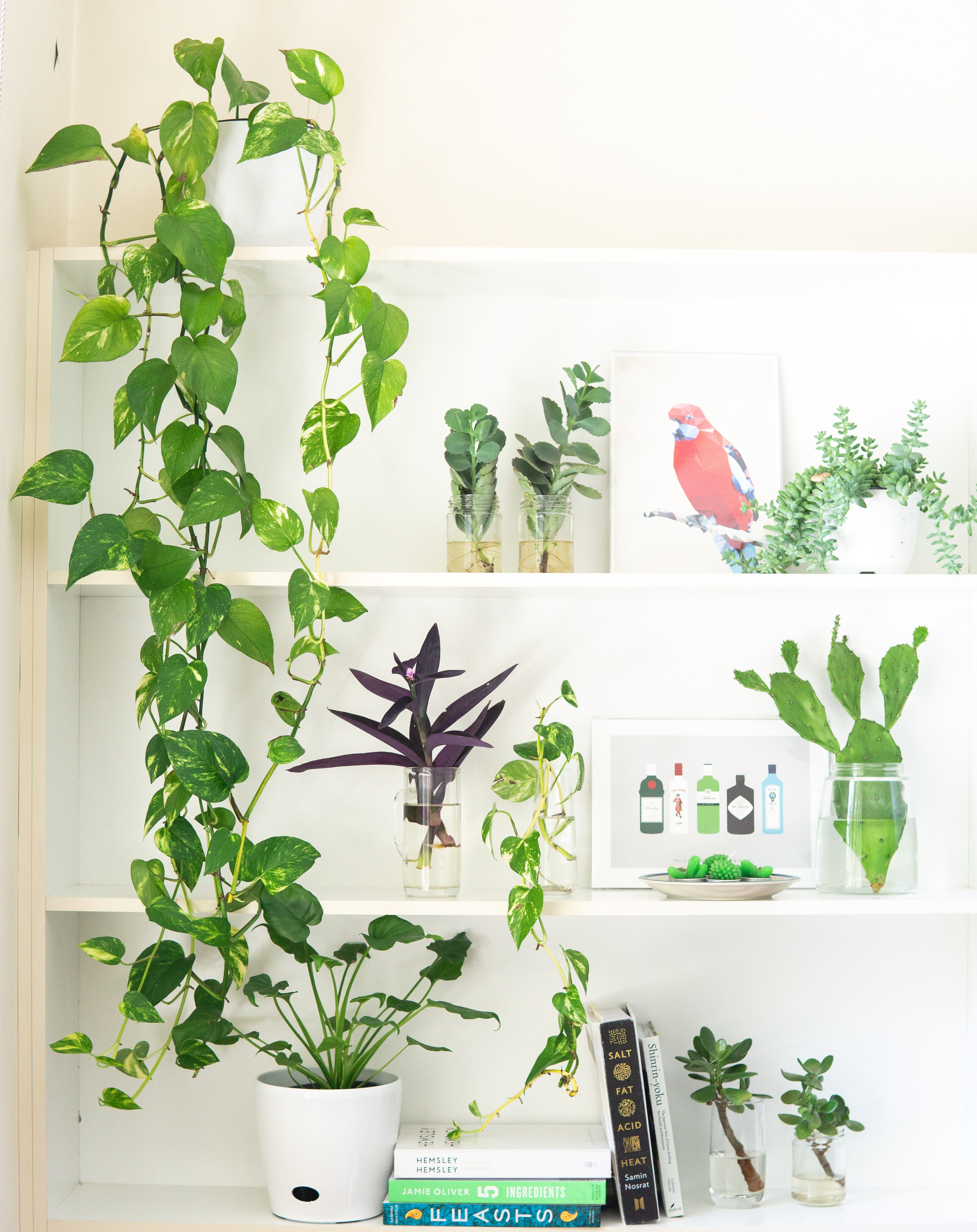 houseplants that are great for beginners on a shelf