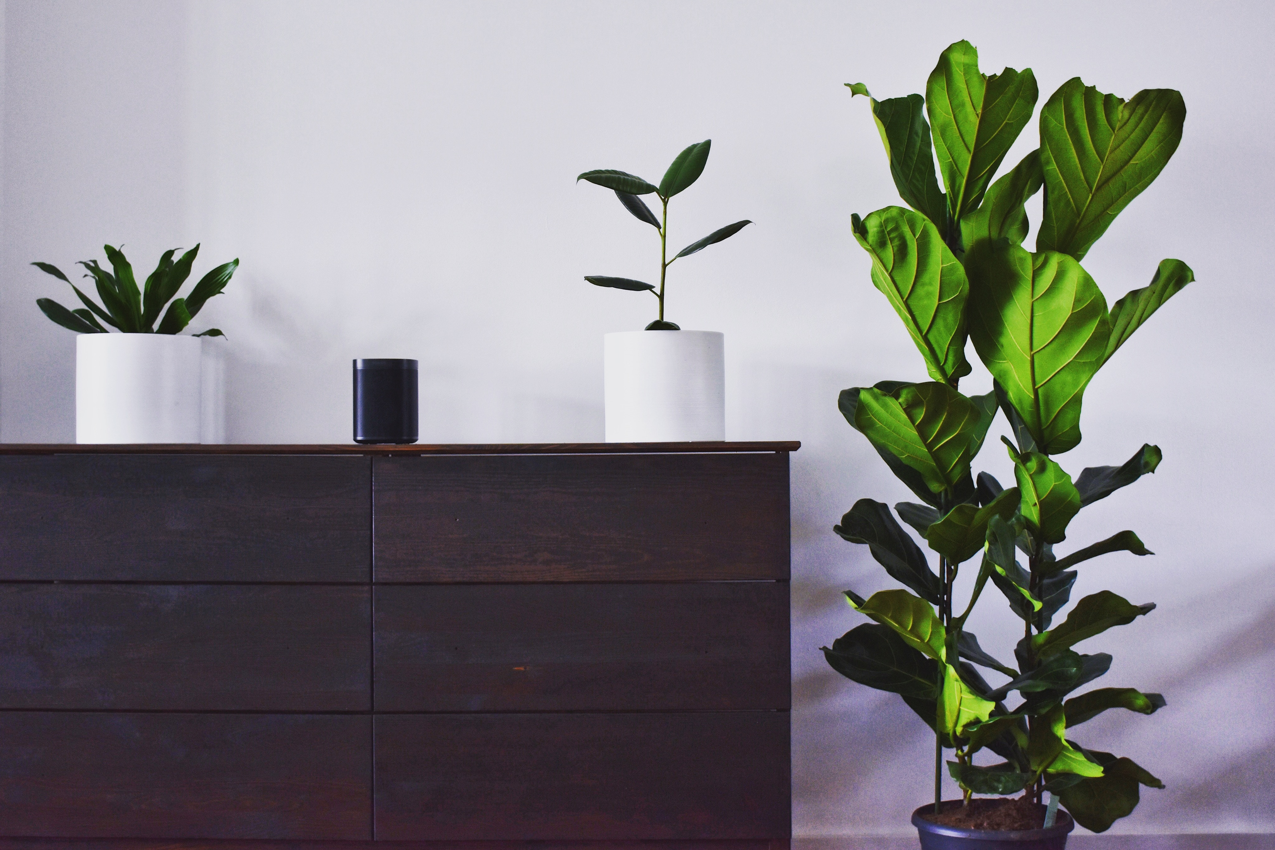 three houseplants with a bedroom dresser