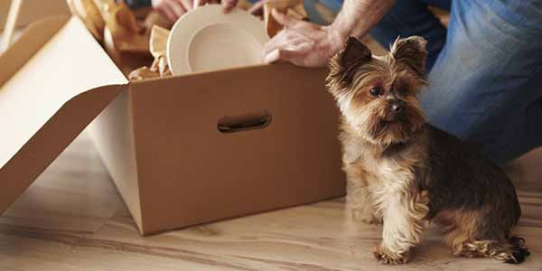 While moving with a dog can be difficult, knowing what steps to take can help make it easier for them, and for you.