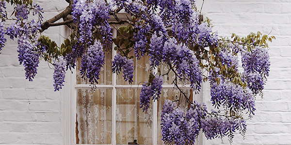 Trim Outside of Windows If you have trees or other greenery outside of your window, it could be blocking your natural light. Make sure to trim back any branches to allow the most light into your home. When planting trees, you should always avoid the southern side of your house. The trees will block valuable sun in the winter and won't provide the proper shade in the summer to make it worth the loss of sunlight.